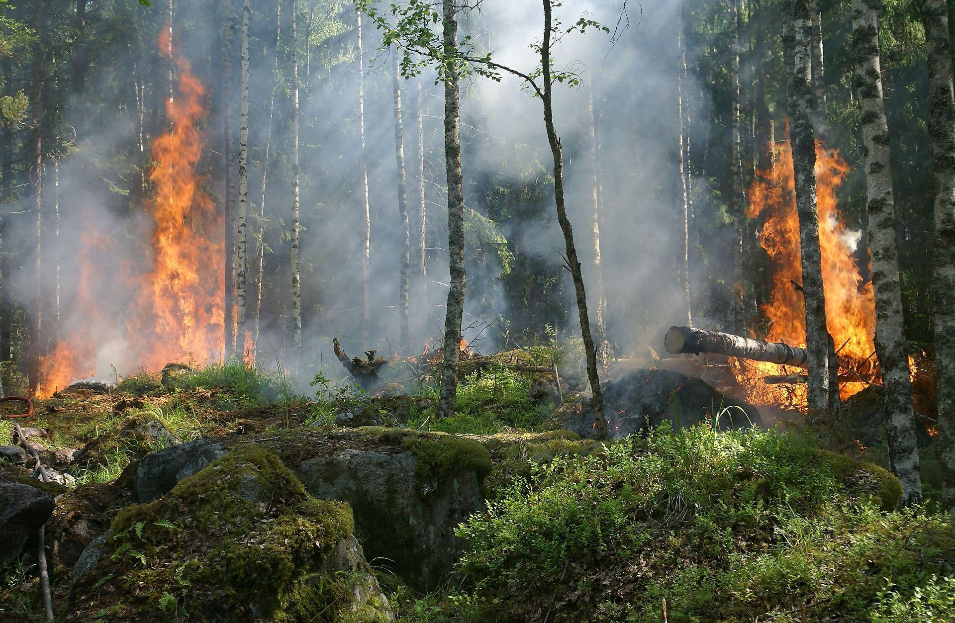 Lee más sobre el artículo ¿Cuál es la situación REAL de los incendios forestales en Australia?